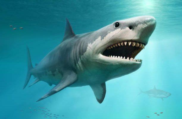 Dans quel cas se complémenter en cartilage de requin ?